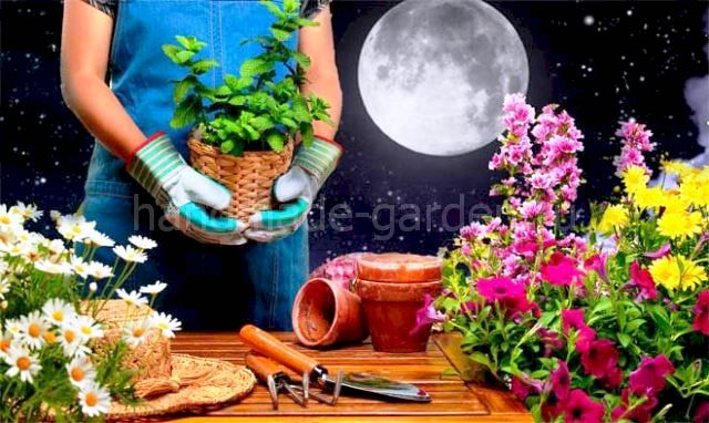 Фазы Луны и их влияние на благоприятные дни