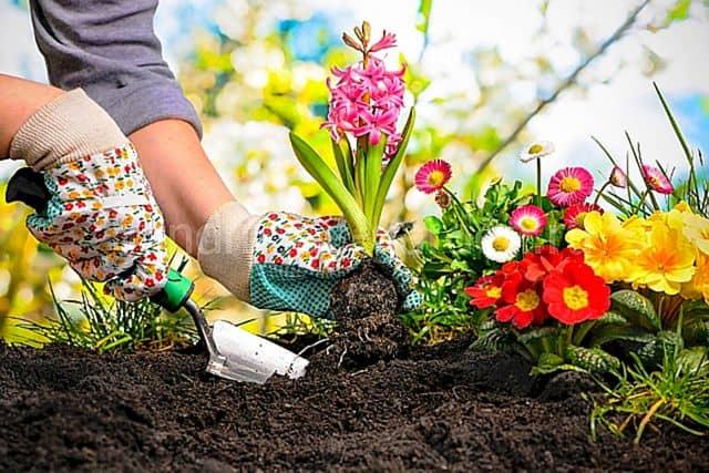 Какие цветы сеять в апреле на рассаду