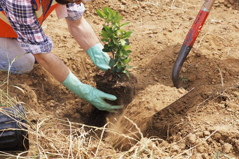Плюсы и минусы посадки деревьев осенью