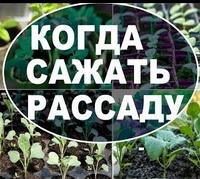 Сроки посева овощных культур на рассаду