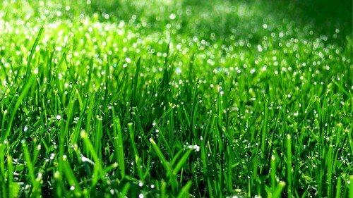 Плотный и упругий растительный покров не даст пробиться сорнякам