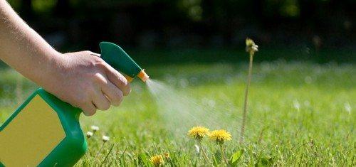 В борьбе с сорняками используются гербициды