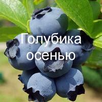 Golubika2