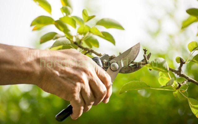 Как выбрать подходящее время для осенней обрезки яблонь
