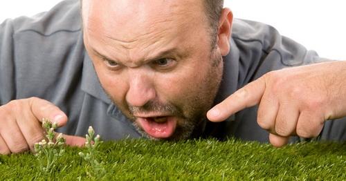 Как избавиться от сорняков на газоне