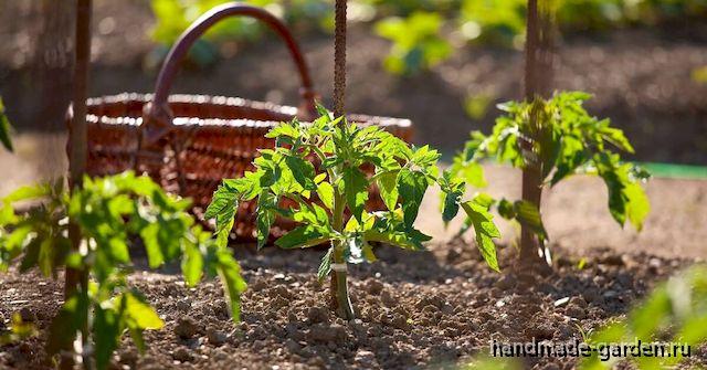 Как ли поливать огород в жару