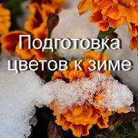 Kak Podgotovit Tsvetnik K Zime