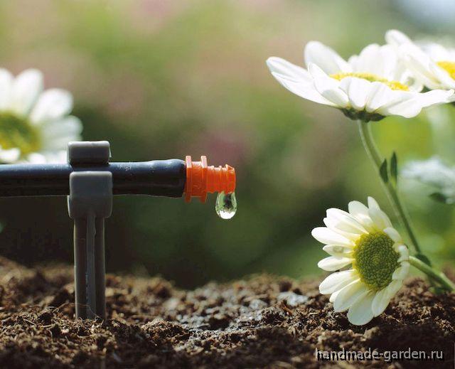 Как ли поливать огород в сильную жару