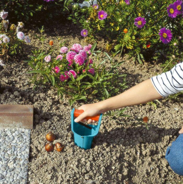Как выбрать здоровые луковицы?