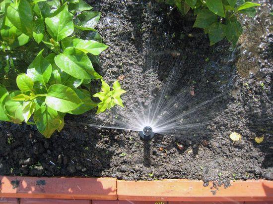 Система орошения огорода фото