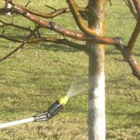 Как и когда проводится опрыскивание яблонь