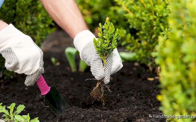 Лунный посевной календарь садовода на 2020 год