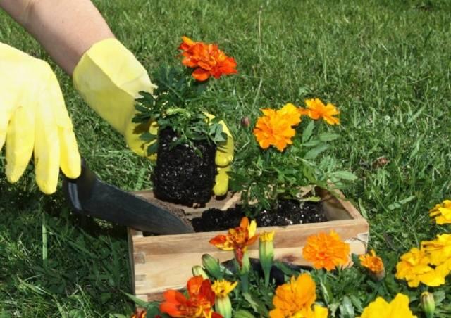 Преимущества посадки под зиму цветов