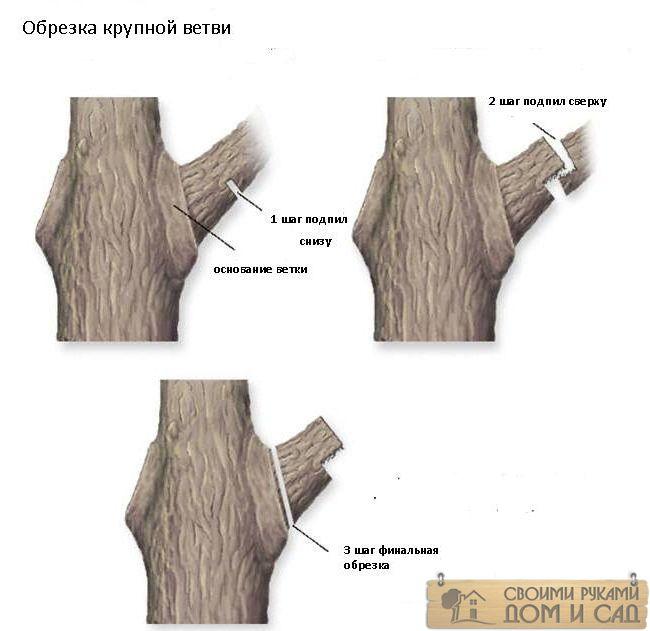 обрезать ветки дерев…