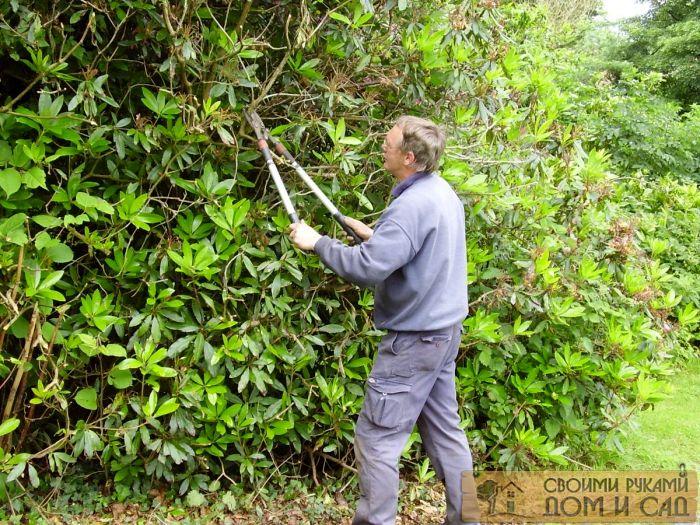 как обрезать деревья…