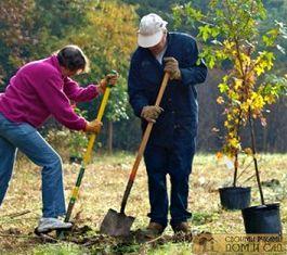 какое дерево сажают осенью