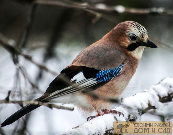 Птицам зимой нужна н…