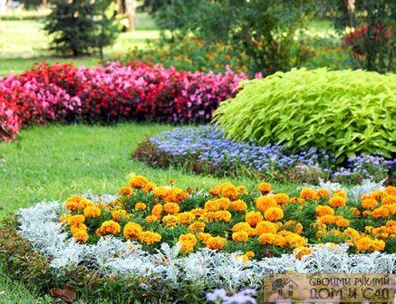 где сажать цветы