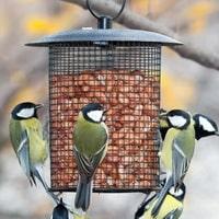 Много фото кормушек для птиц