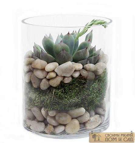 комнатные растения к…