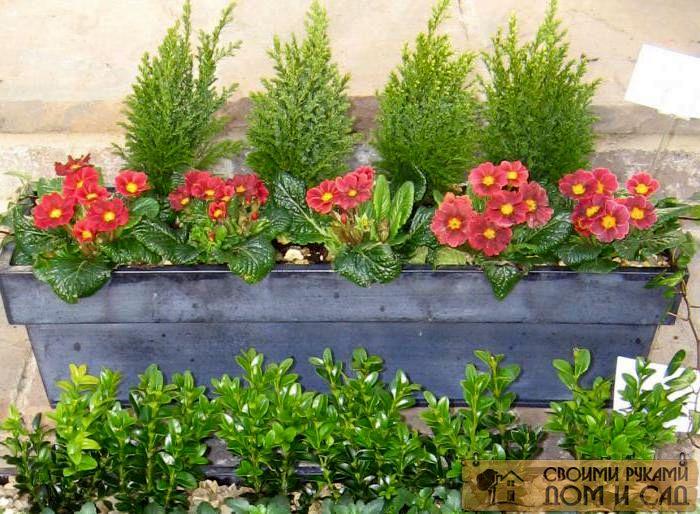 ящики для цветов сво…