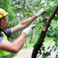 Когда лучше обрезать деревья