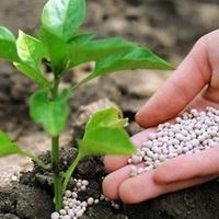 кислая почва на огороде что делать весной