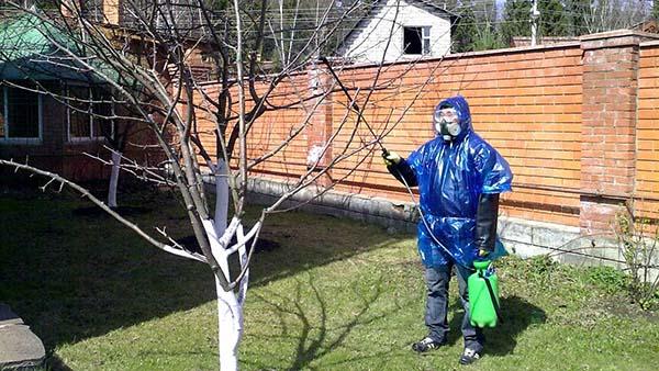 Как правильно обработать сад весной