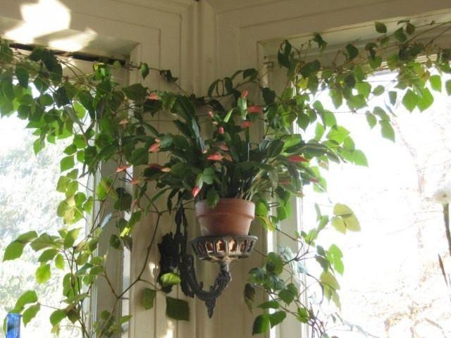 Летний уход за комнатными растениями