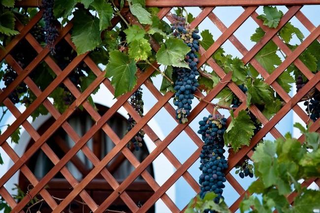 Одноплоскостная конструкция шпалеры для винограда