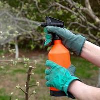 В какие сроки обработать сад весной