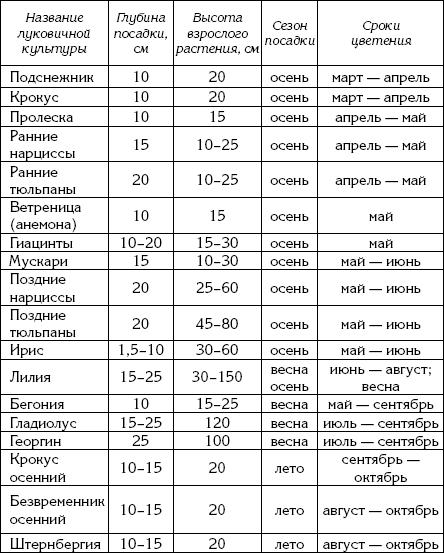 Таблица сроков посадки и цветения луковичных культур