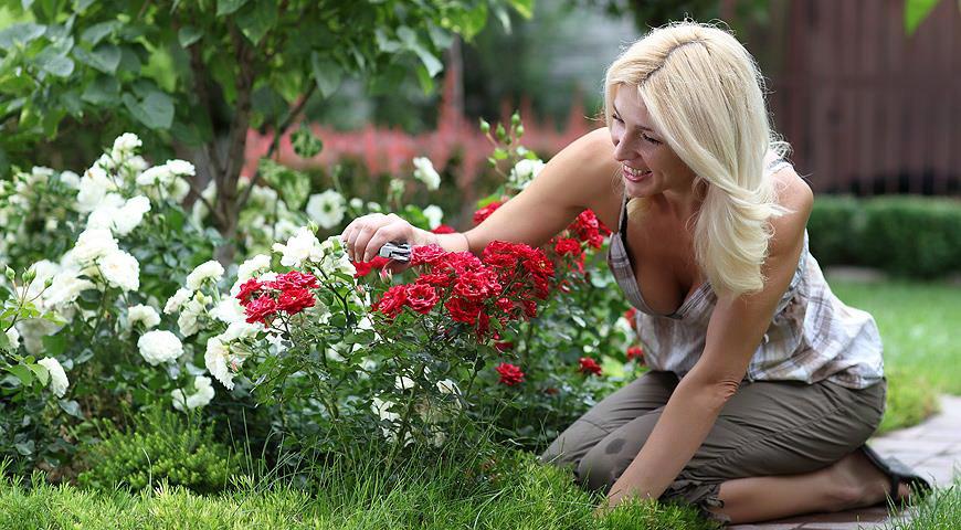 Сад и огород в Сибири