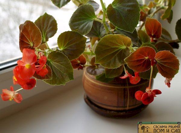 Какие растения приносят несчастье в дом
