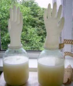 фото банки с перчаткой для брожения