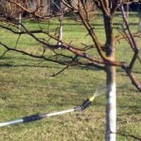 Опрыскивание деревьев осенью