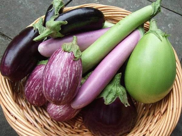 Когда и как правильно снимать плоды баклажана?