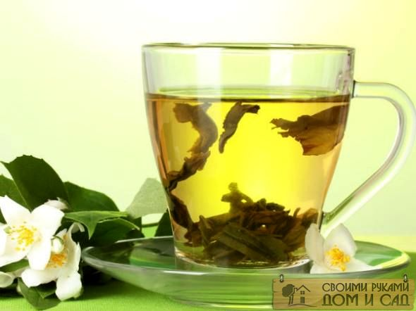 Все о зеленом чае