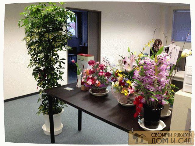 цветы в офисе