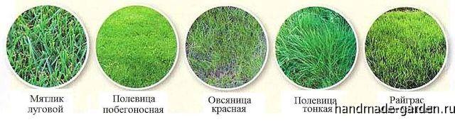 Виды трав для посадки газона на даче