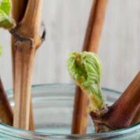 Как заготовить и сохранить черенки винограда
