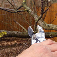 Обрезка плодовых деревьев осенью и весной
