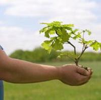 Как правильно сажать плодовые деревья осенью?
