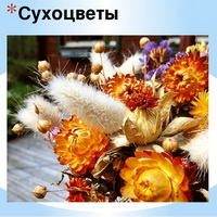 Наиболее распространённые сухоцветы