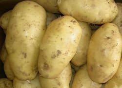 Картофель «Санте» – …