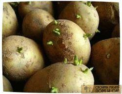 проращивание картошк…