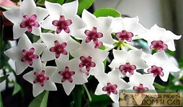 красивый здоровый цв…