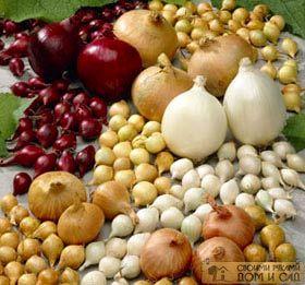 сорта и виды лука