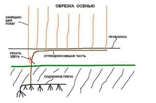 Obrezka2(1)