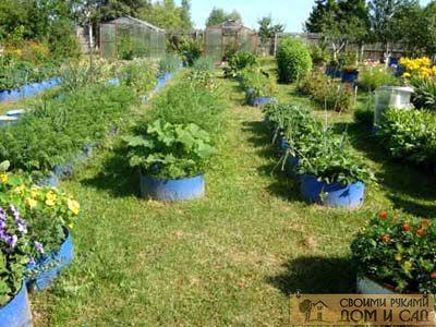 Огород для ленивых- …